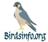 Birds Information and Facts