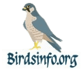 Birdsinfo.org