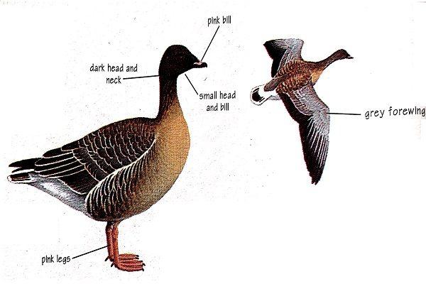Bird-identification