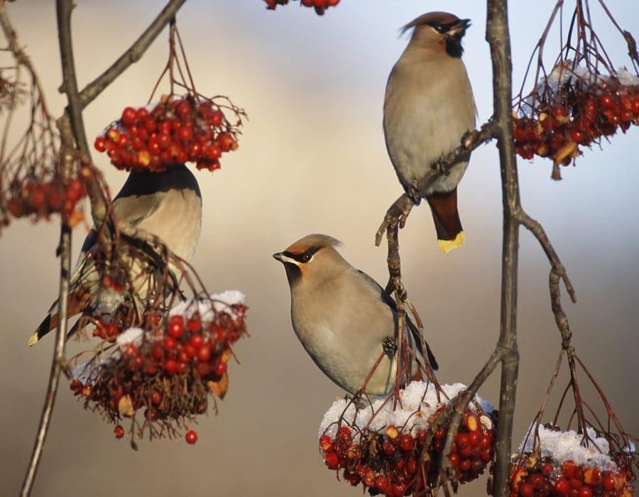 Bird Habitats