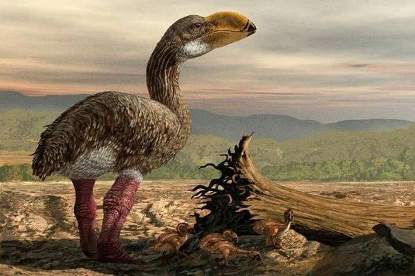 Australian Dromornis Stirtoni