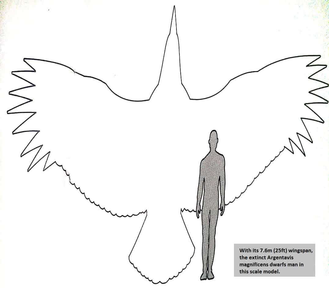 The largest bird which ever flew