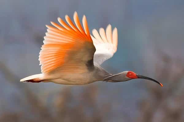 The rarest birds in the world