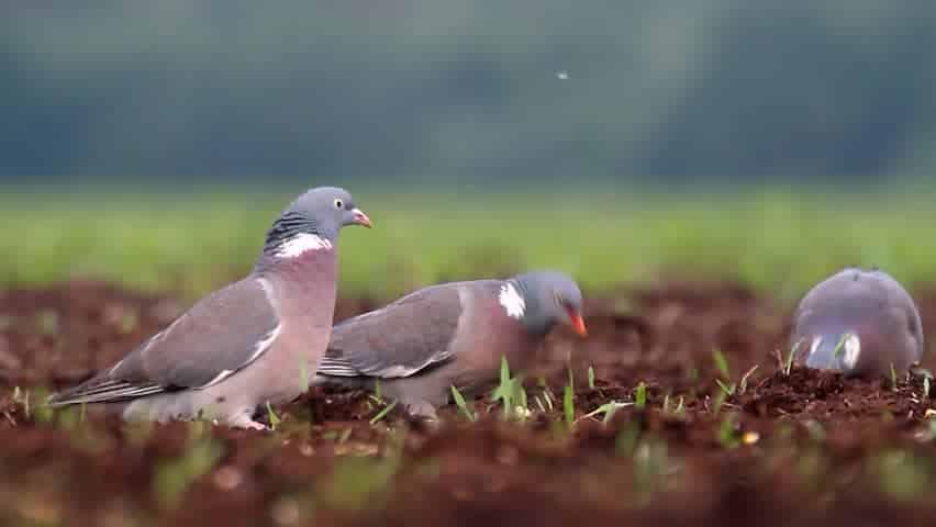 The richest bird habitat in the world