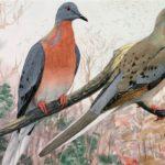 passenger-pigeon-history